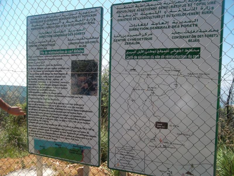 """Randonnée pédestre,Akfadou """"Agelmim aberkan (Lac Noir)"""" vendredi 13 juin 2014 - Page 2 275"""