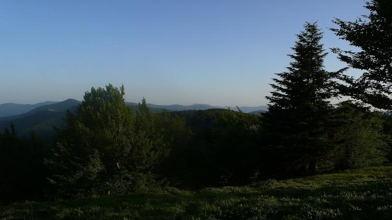 Diverses sorties ¨dans mon jardin¨ . P1080713