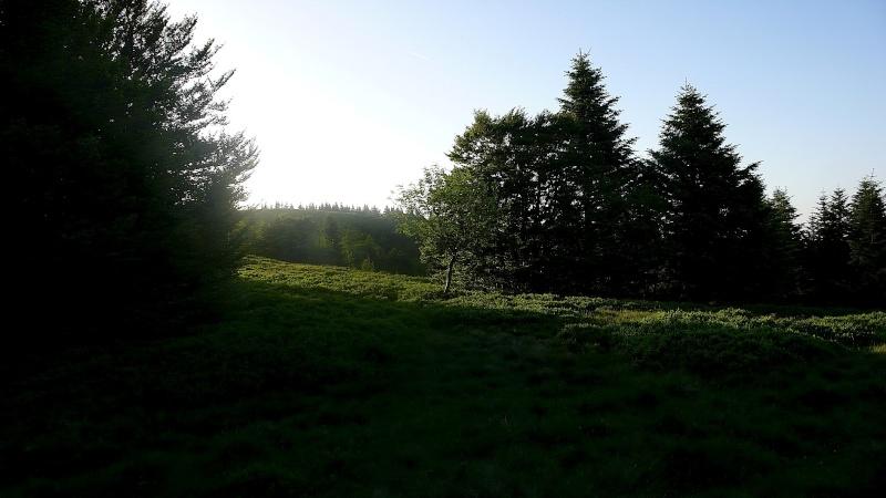 Diverses sorties ¨dans mon jardin¨ . P1080715