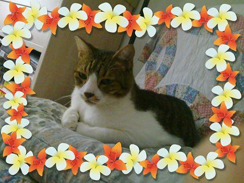 Tigrou et Mysti adopét à l'école de chat libre de Toulouse Mysti10