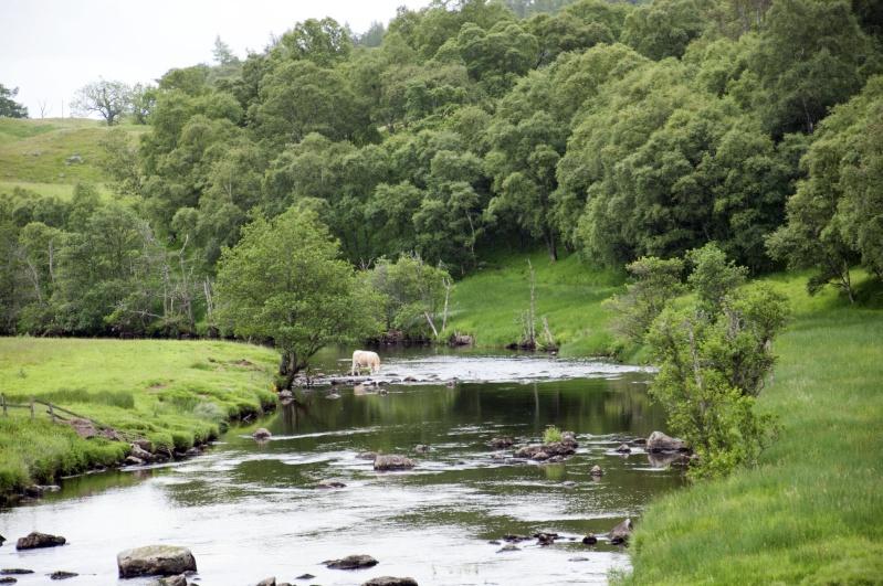 Ecosse: Speyside, Isle of Skye, Edimbourg - Page 2 Dsc_0613