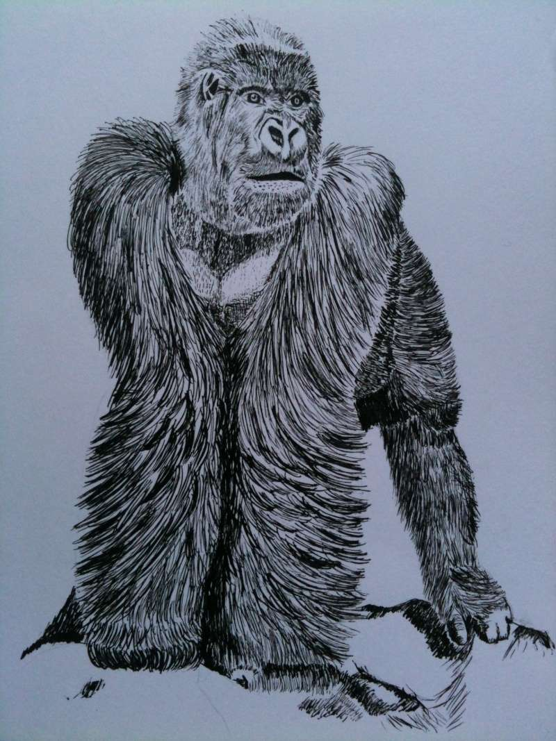 Nos créaZions Gorill10