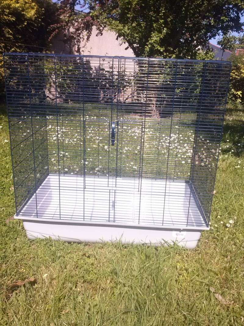 Cage freddy 2 max Cage11
