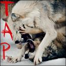 Announcements Tap_bu10