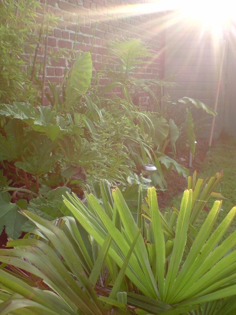 mon jardin du 80 P0607111