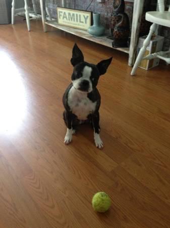 Missing Dog-Roxy (Falls Church) 00505_10