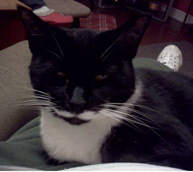 Missing Cat- Ruby (Galloway, OH)  00e0e_10