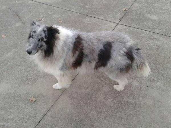 Lost Dog- (Louisville, KY) 00f0f_10