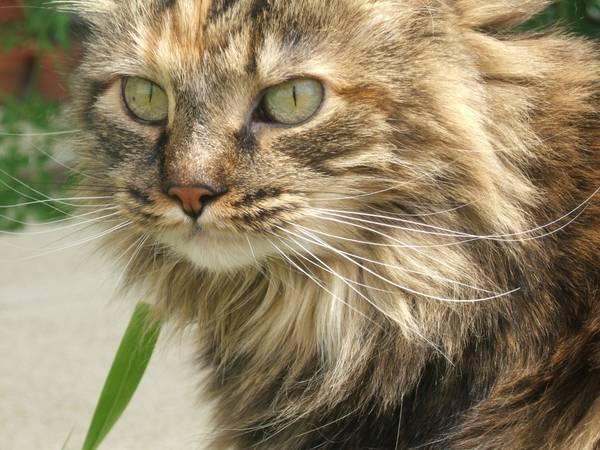 Missing Cat- Pretty (Galloway) 00l0l_10