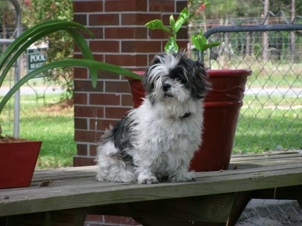Lost Dog- (Live Oak, FL) 00s0s_10