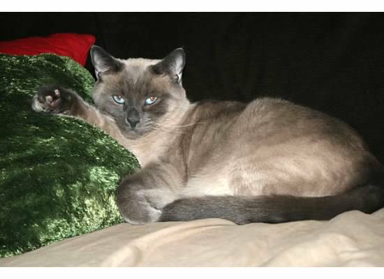 Missing Cat- Clayton (South Ridings) 00t0t_10