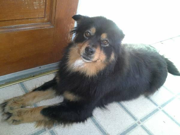Lost Dog-Sugar (Beechmont/Southen pkw) 00w0w_11