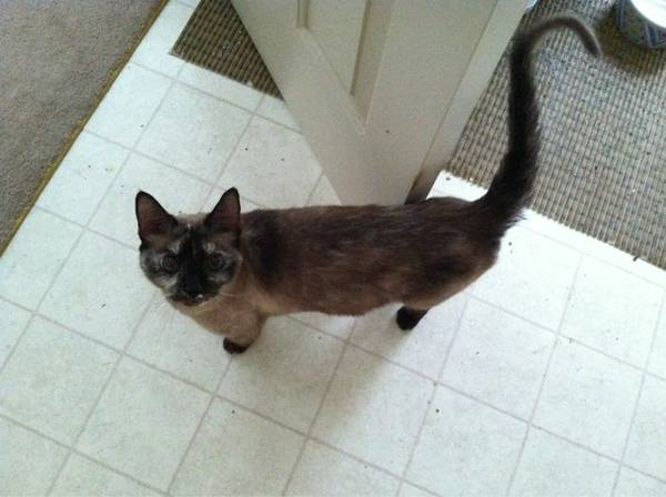Lost Cat- (Jeffersontown) 00x0x_10