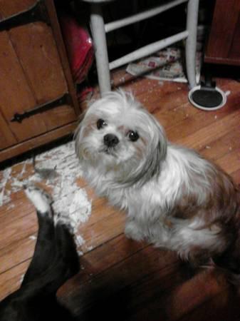 Lost Dog- (PasadenaAve)  00y0y_10