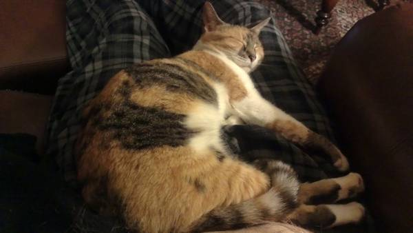 Missing Cat-Azalea (Indian Hills) 01414_10