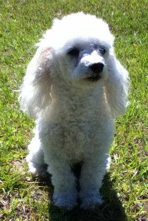 Missing Dog- (Live Oak, FL) 3ed3g810