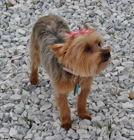 Missing Dog-Lucky (Downtown Garner) 3r23td10