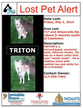 LOST SIBERIAN HUSKY Indy310
