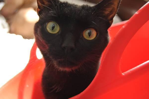 LOST BLCK CAT Pa610