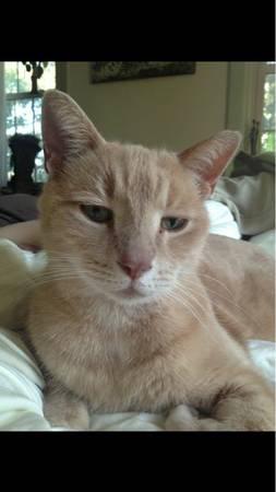 LOST CAT - LANCASTER PA Pa710
