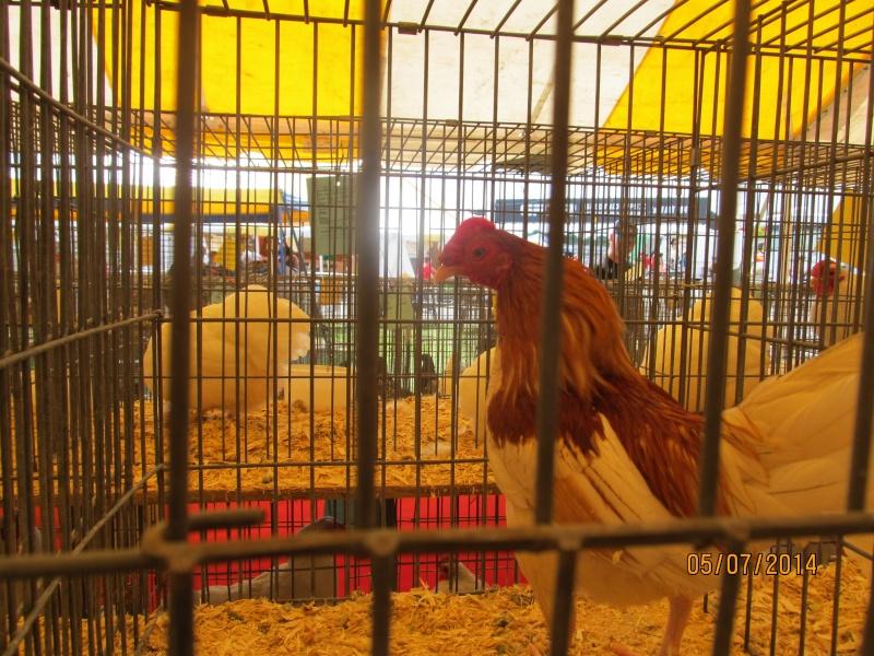 Expo agricole Trois-Rivières Img_2614