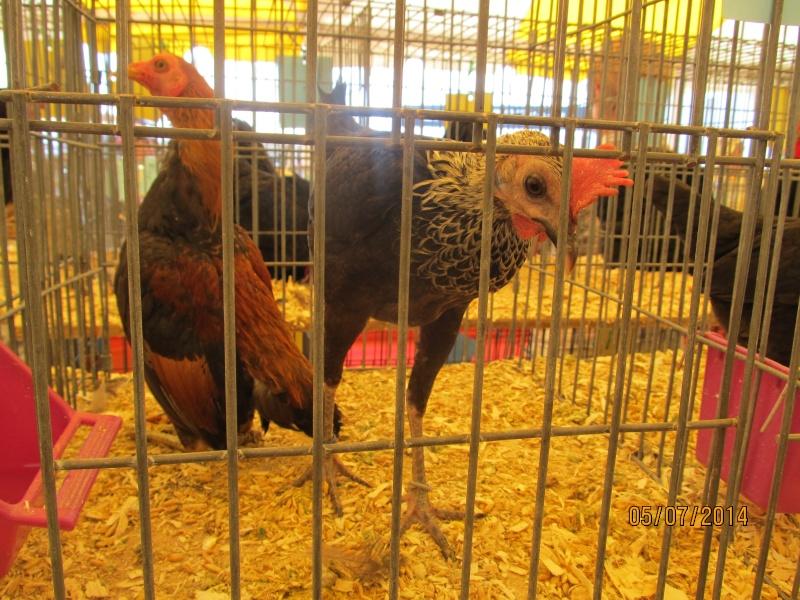 Expo agricole Trois-Rivières Img_2616