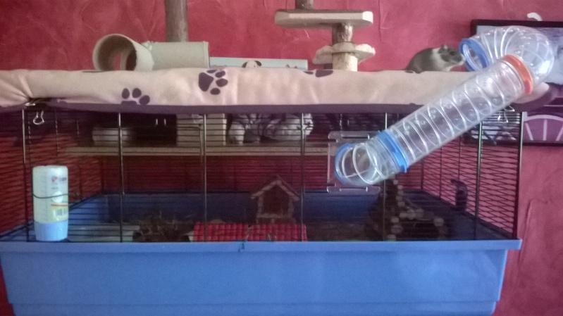 HEEEELLLPPPP Dipsy a perdu beaucoup de poids malgré qu'il mange et ses poiles sont tout ébouriffés !!! :( Wp_20186