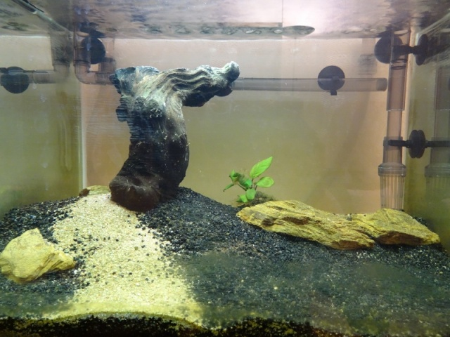 Nouvel aquarium Scaper's Tank 50 L Dsc05410