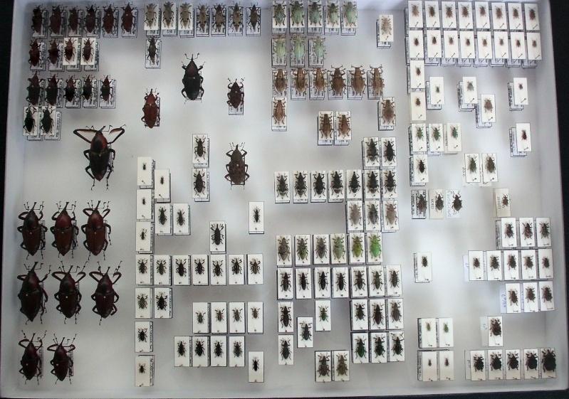 Présentation des collections Entomologiques - Page 7 Cimg0410