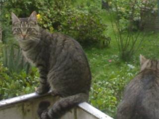 Gute Botschaft an euch Katzen da draußen: Tötungsverbot 11092010