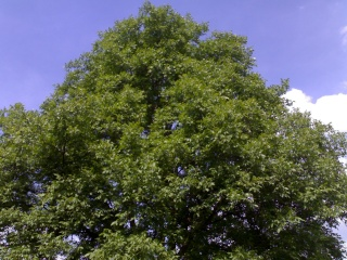 Baum hat ein würdiges Grabgesteck bekommen 13052011
