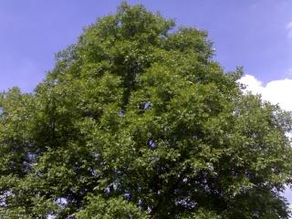 Mein Gesprächspartner Baum ist gestorben 13052015