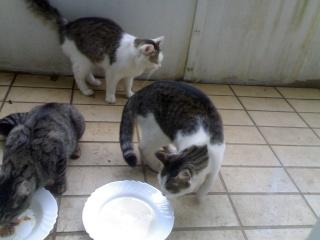 Katzen denken, Menschen sind auch Katzen 13092010