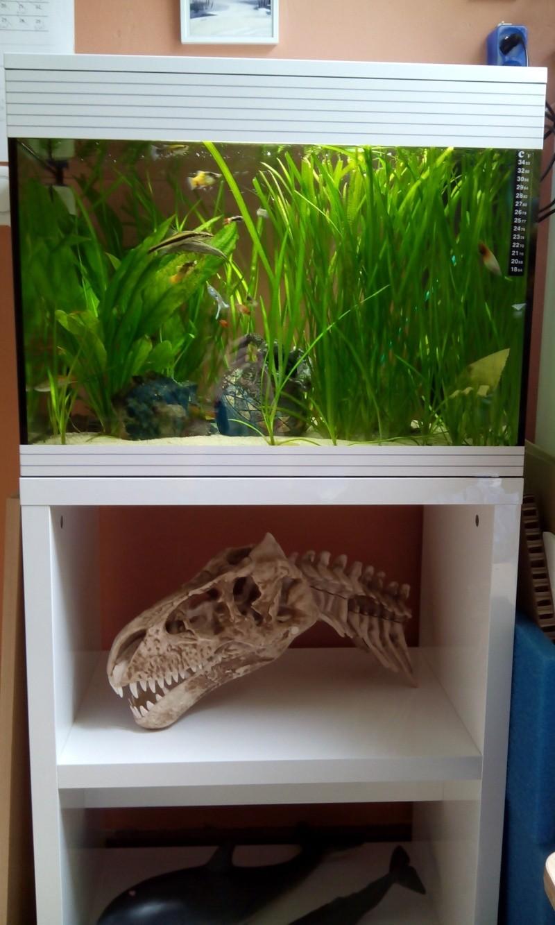 Mon aquarium  2014-011