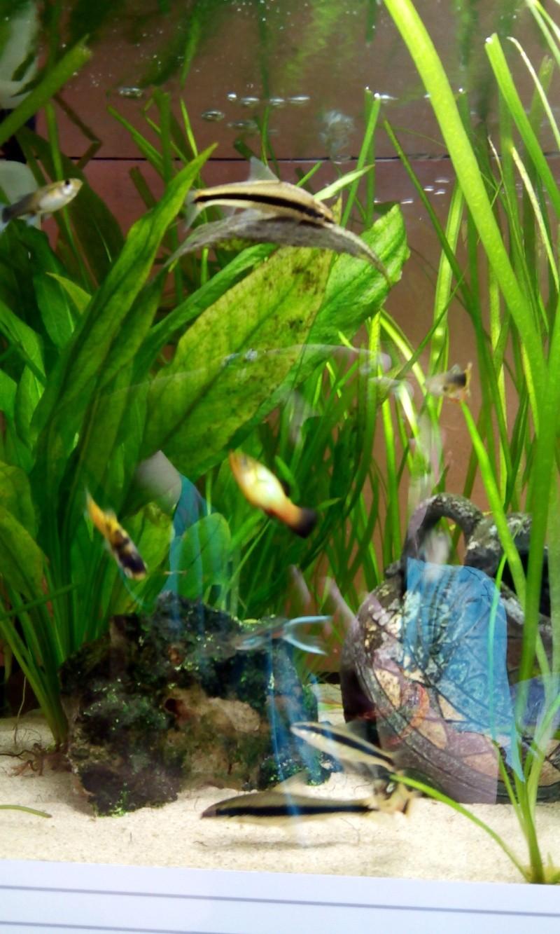 Mon aquarium  2014-013