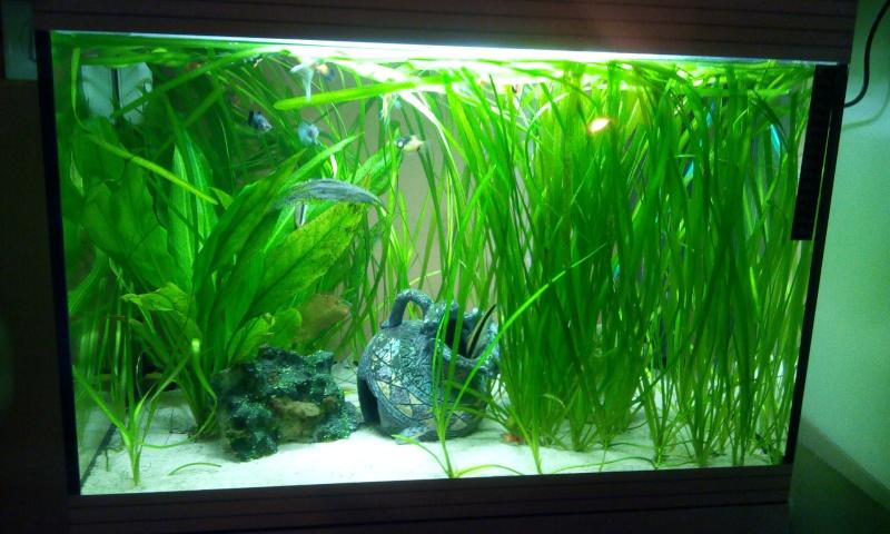 Mon aquarium  2014-014
