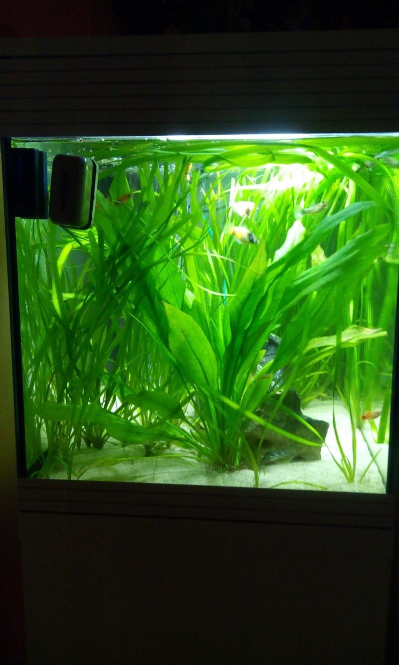 Mon aquarium  2014-015