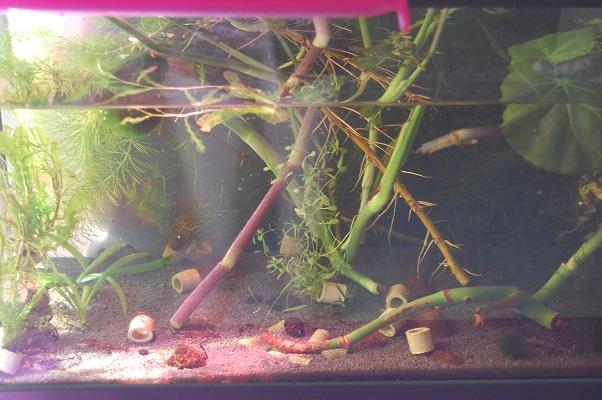 Nano 13 litres aselles et sp green 13_210