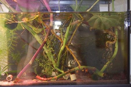 Nano 13 litres aselles et sp green 13_510