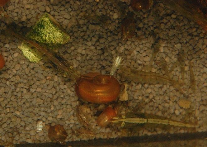 Nano 13 litres aselles et sp green B610