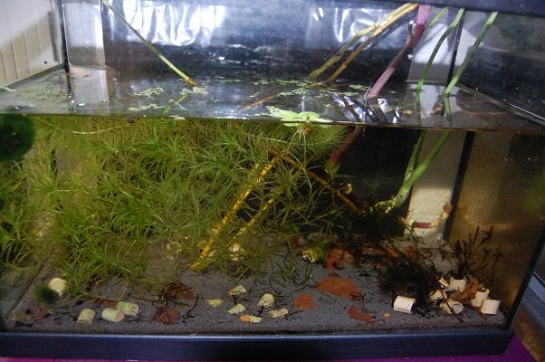 Nano 13 litres aselles et sp green Bac_gr10
