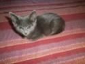 De nombreux chatons adoptés cet été Flora310