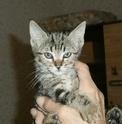 De nombreux chatons adoptés cet été Mazurk10