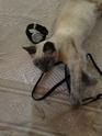 De nombreux chatons adoptés cet été Shiva210