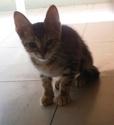 De nombreux chatons adoptés cet été Tigrou10