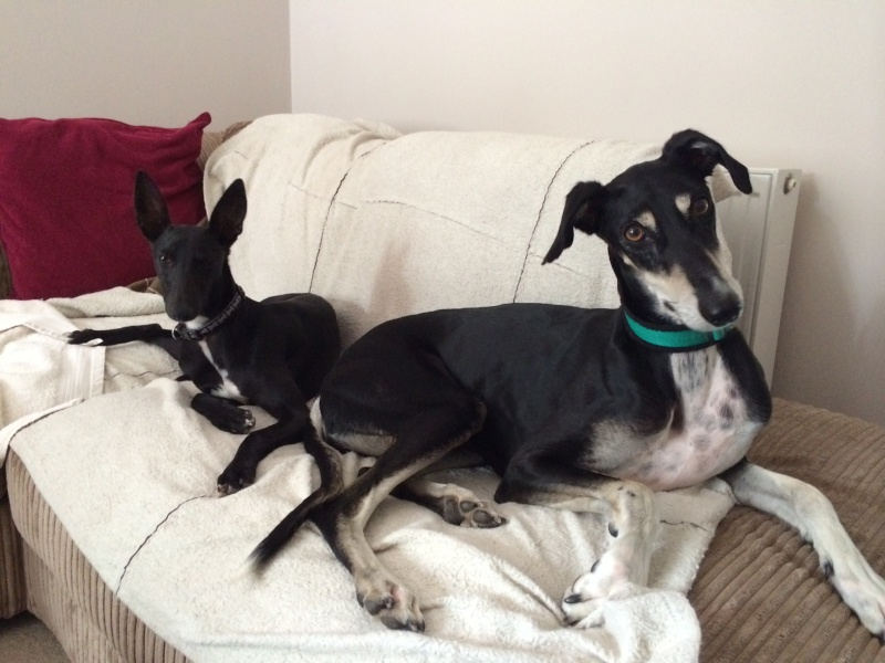 6. Best Happily Homed LSOS Hounds Photo_15