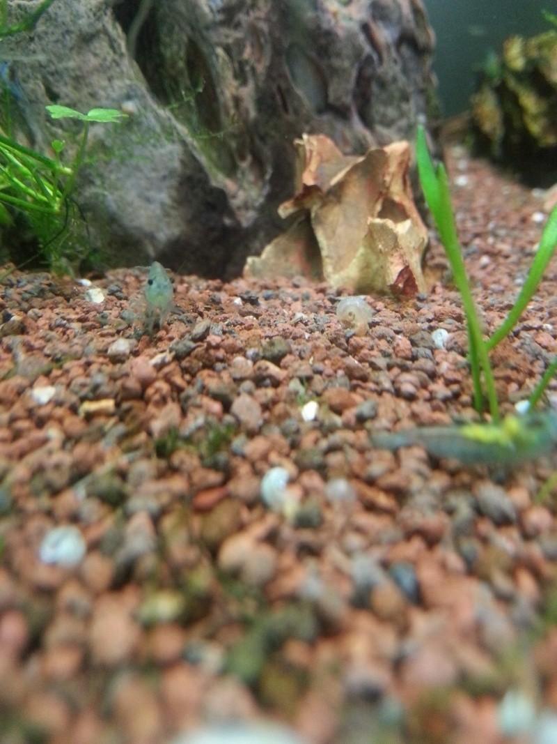 Les crevettes à Moi - Page 15 Image18