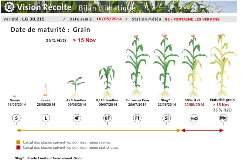 Maïs grain le marché en Berne !!!!!!!!!!!! - Page 3 Mays10