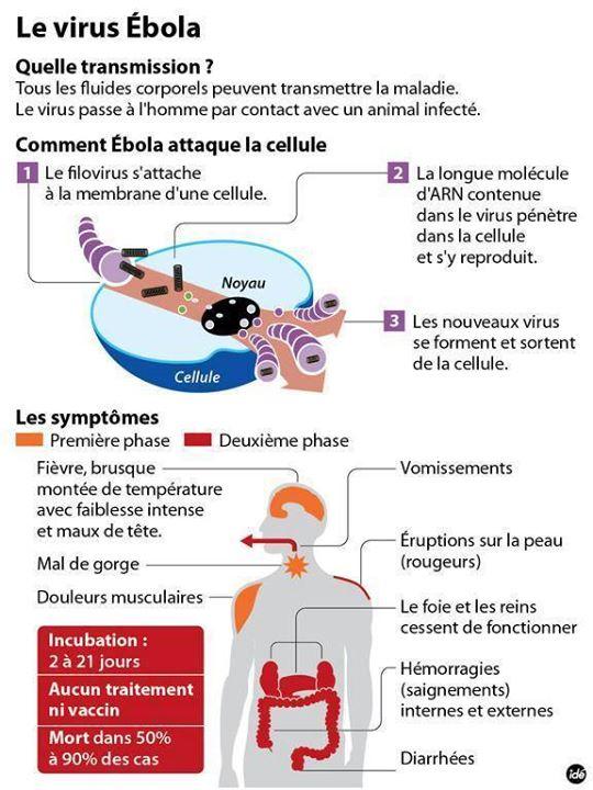 """""""Notion sur le virus""""ébola 10552511"""
