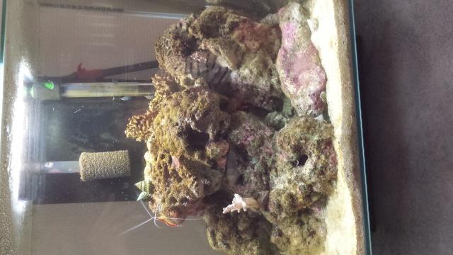 algue dans mon bac 20140911
